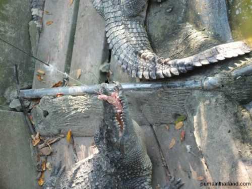 отец с дочками кормит диких попугаев прямо на своем балконе чудеса в австралии